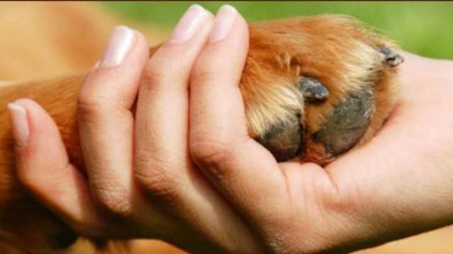 Hodowla psów i kotów a ochrona zwierząt – analiza polskich rozwiązań prawnych