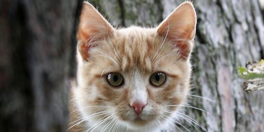 Międzynarodowy dzień kota
