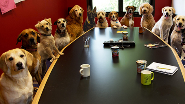Nie można zabronić wchodzenia do urzędów z psem – wyrok WSA