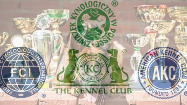 O zasadach członkostwa ZKwP w FCI