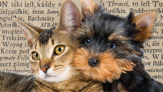 O różnicy między psem a kotem
