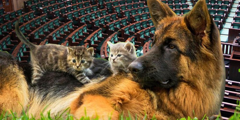 Poselskie projekty ustaw o zmianie ustawy o ochronie zwierząt