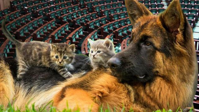 Parlamentarny Zespół Przyjaciół Zwierząt